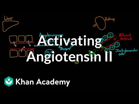 Activating angiotensin 2 | Renal system physiology | NCLEX-RN | Khan Academy