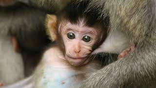 Monkey Forest - Epic Indonesia - Ep.2
