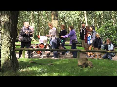 Monkey Forest (HD)