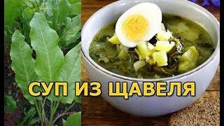 Как варить суп из щавеля