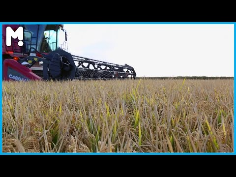 🌾 Rice Farming From Seed To Harvest - Modern Australian Rice Harvesting And Processing ▶26
