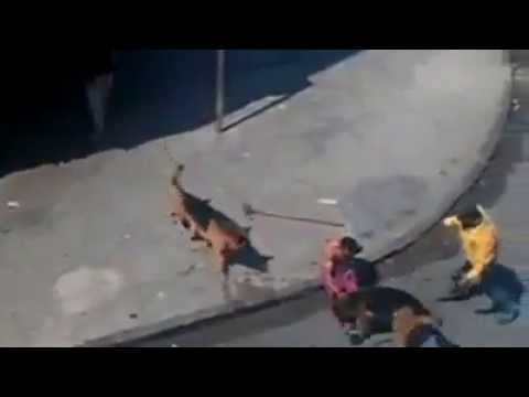 видео: Камнями против собак - это вредный совет