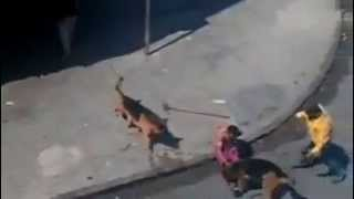 Камнями против собак - это вредный совет(Могу лишь предположить, что прохожим не понравилось, что одна из овчарок не на поводке, сделали замечание,..., 2013-05-11T01:06:55.000Z)