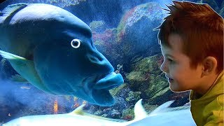 Underwater Sea Animals in Aquarium | Timko Kid Play with New Shark Toys