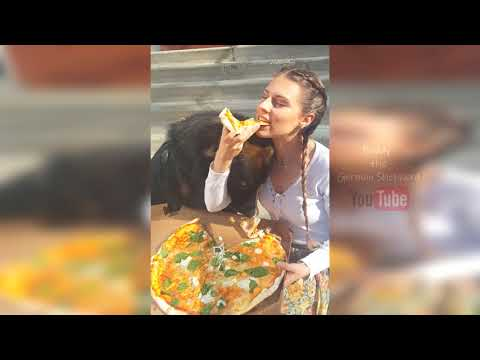 Funny German Shepherd cutest dog Compilation 2020