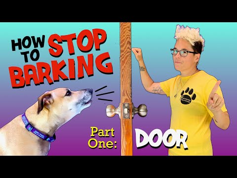 how-to-train-your-dog-to-stop-barking