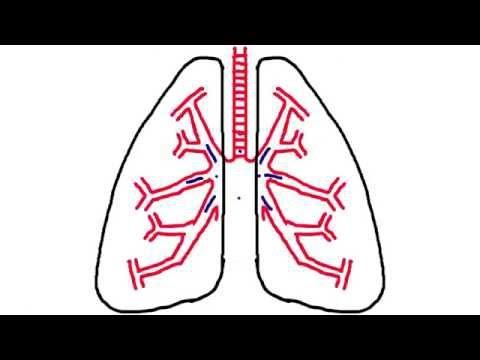 Nasal Breathing: Efficient Breathing