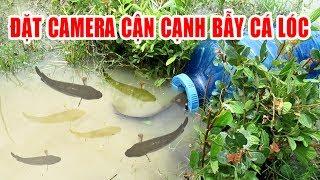 Đặt Camera cận cảnh bẫy cá lóc | Build Fish Trap And Catch Catfish | góc sẻ chia