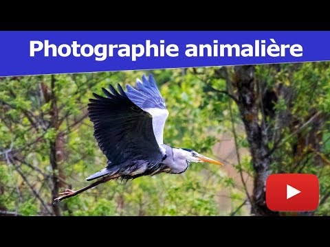 Photographier un oiseau en vol avec Alexandre - Coaching Photo S01-E02