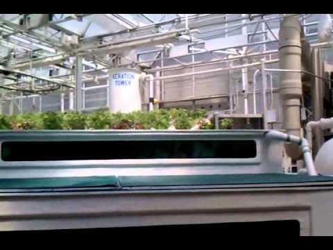 Starting A Greenhouse Garden