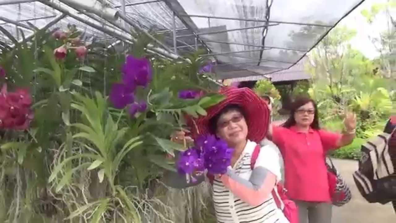 201406清邁 蘭花園1 蝴蝶園 養殖場 四季蘭花 萬紫千紅 小橋流水 Chiang Mai - YouTube