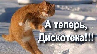Коты танцуют и поют!