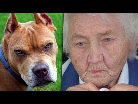 امرأة عجوز انقذت كلب بيتبول شرس من الشارع , وبعد أيام سمع الجار صرخات تقشعر لها الأبدان  - 13:51-2019 / 11 / 6