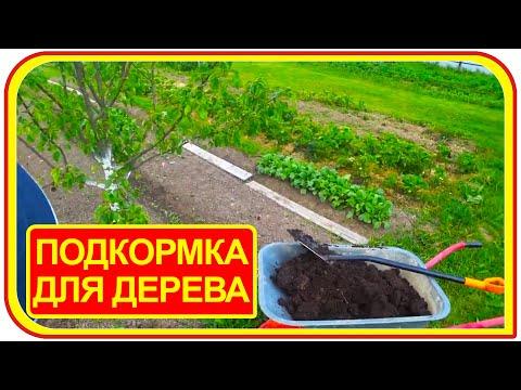 Удобрение для плодовых деревьев своими руками. Чем удобрять деревья?