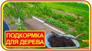 видео Высаживание деревьев своими силами