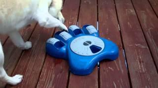 Jindo Dog Problem Solving