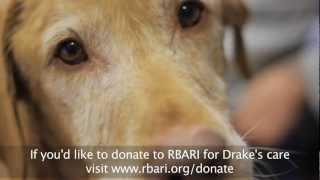 Drake - Ramapo-Bergen Animal Refuge, Inc.