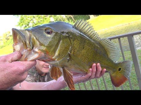 PB! Peacock Bass {Catch Clean Cook} Potato Crusted Fish Sandwich