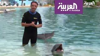 يمكنك خوض تجربة السباحة مع الدلافين في سي كواريوم ميامي