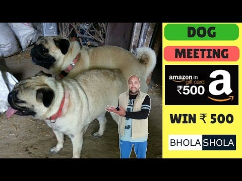 Amazing Dog Meeting !! Breeding dogs with dogs for long time