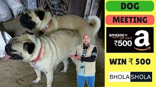 Amazing Dog Mating !! Breeding dogs with dogs for long time