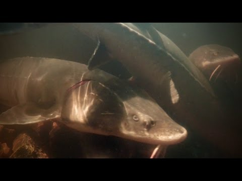 Fish Species In North America — Underwater Minute