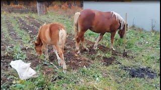 Табун лошадей атакует жителей тульского села