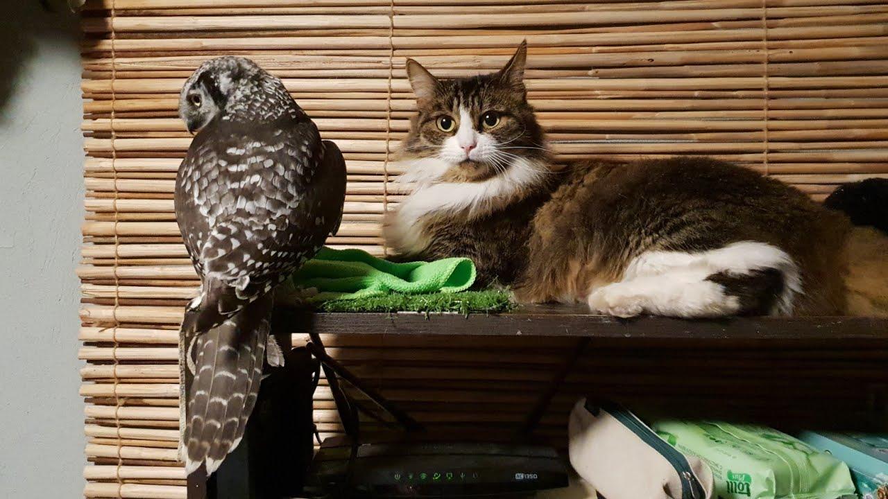 знакомство кота с ой