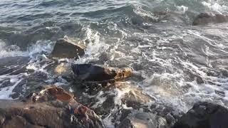 Чёрное море  Звуки природы
