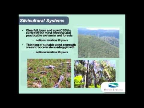 Forestry Talks - Lee Stamm - The Science Behind Sustainable Wood Supply Calculations