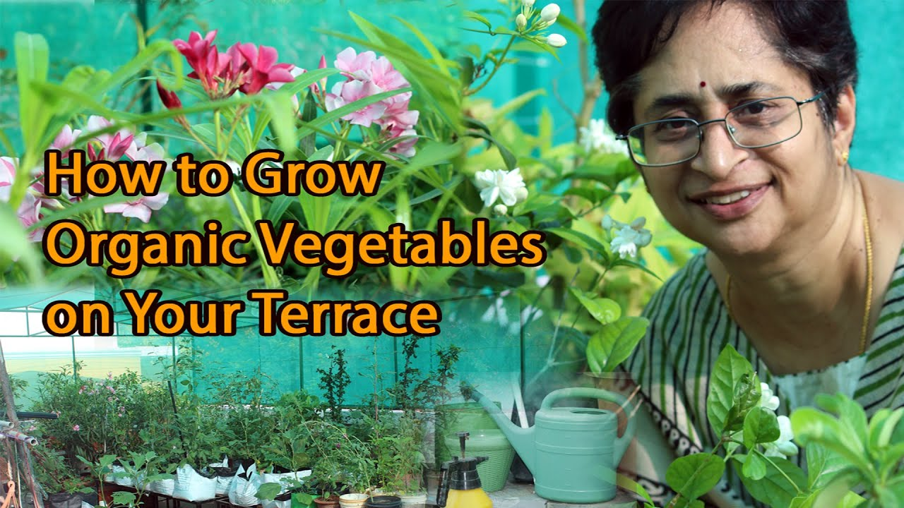 Terrace Kitchen Garden How To Grow Organic Vegetables Terrace Garden Youtube