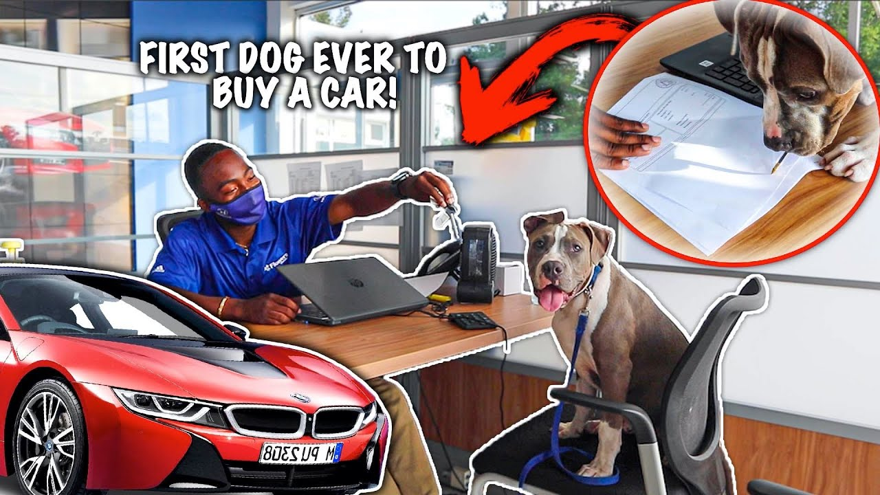 MY BLUENOSE PITBULL BOUGHT A CAR!! *First Dog To Purchase A Car*