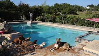 Dog Training Sacramento In The Pool