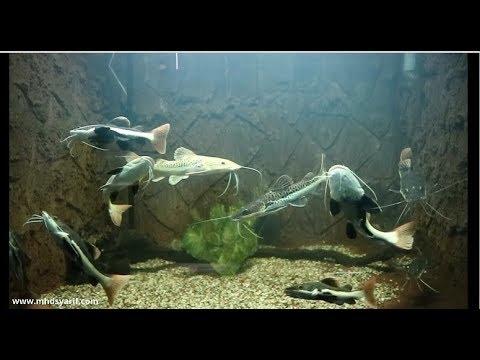Hore Aquarium Baru Kebun Binatang Surabaya