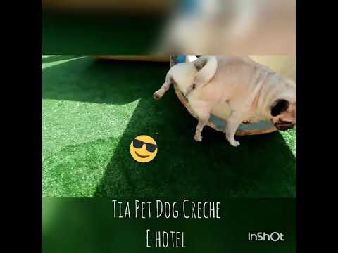 Tia Pet Dog Creche e Hotel