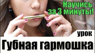 Как научиться играть на губной гармошке [УРОК]