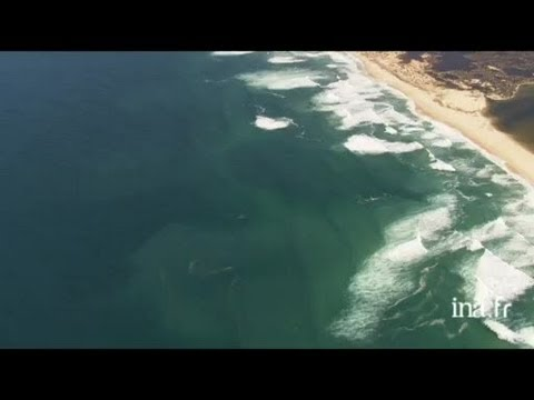Afrique du Sud : baleine et baleineau au large de Cape Town