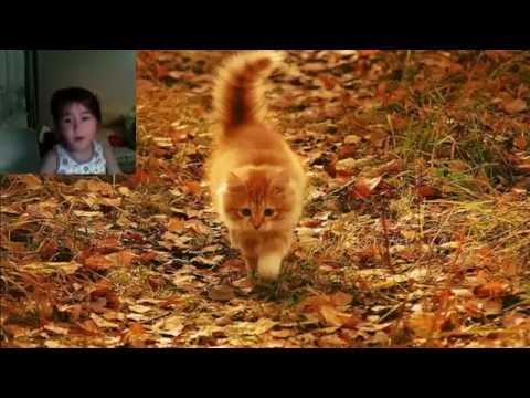 Лицей - Осеньиз YouTube · С высокой четкостью · Длительность: 4 мин32 с  · Просмотры: более 193.000 · отправлено: 13-11-2013 · кем отправлено: StarPro