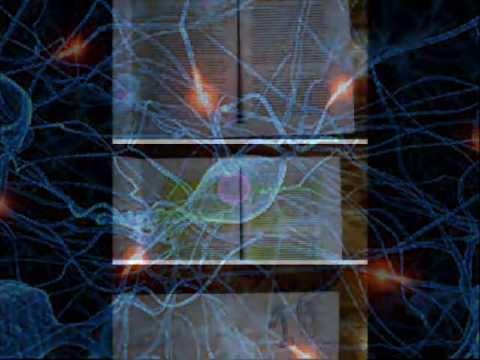 cerebro en accion RF