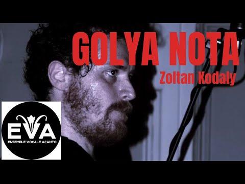 Golya nota -