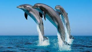 Шоу дельфинов. Только положительные эмоции!