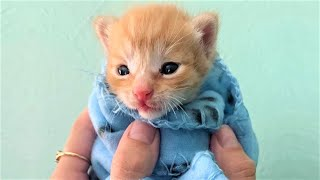 Rescue Tiny Kitten From Some Garbage Mom Cat Never Came