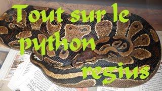 tout sur le python regius partie 1