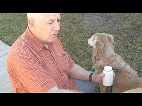 pet-connection-reviews-ramp4paws-dog-ramp