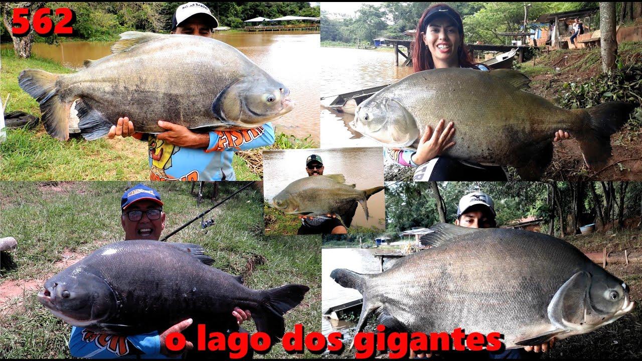 Lago Azul - Os Tambacus Gigantes do famoso lago azul - Fishingtur na TV 562