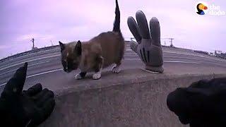Kitten Stuck On Busy Highway Median | The Dodo