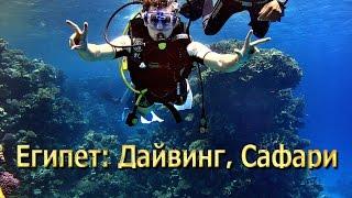 видео Туры из Москвы в Шарм Эль Шейх