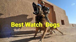 Best watch Dogs.