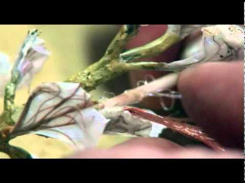 Como se hace un rbol sencillo 3 3 youtube for Como se desarrolla un arbol