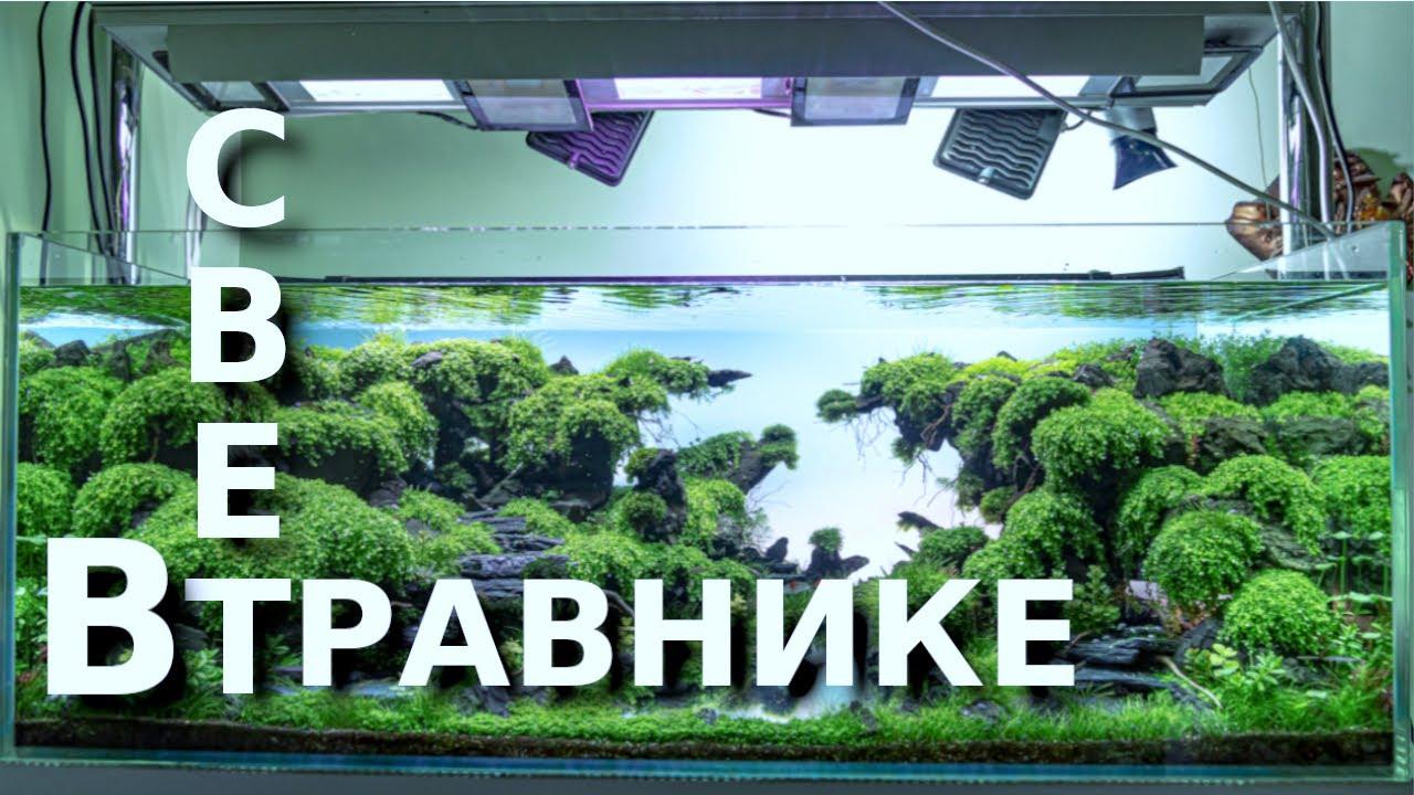 Свет в крутом аквариуме травнике + рекомендации